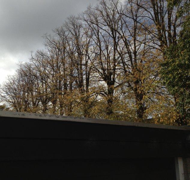 garage-trees