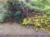 garden-wall